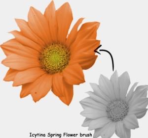 flower_colouring